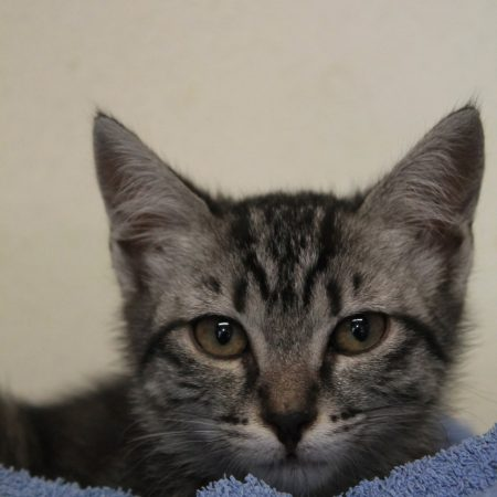 gattile nuovi 001