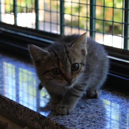 gattile nuovi 010