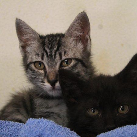 gattile nuovi 022 (1)
