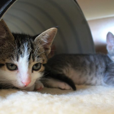 gattile e varie 026